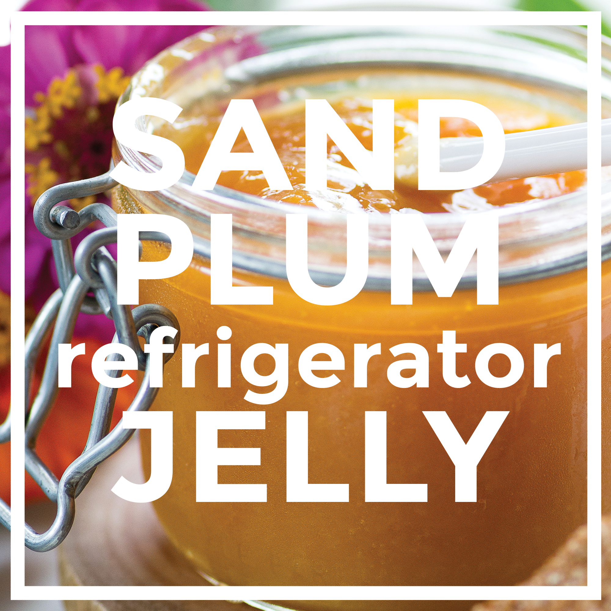 Sand Plum Jelly by An Unrefined Vegan