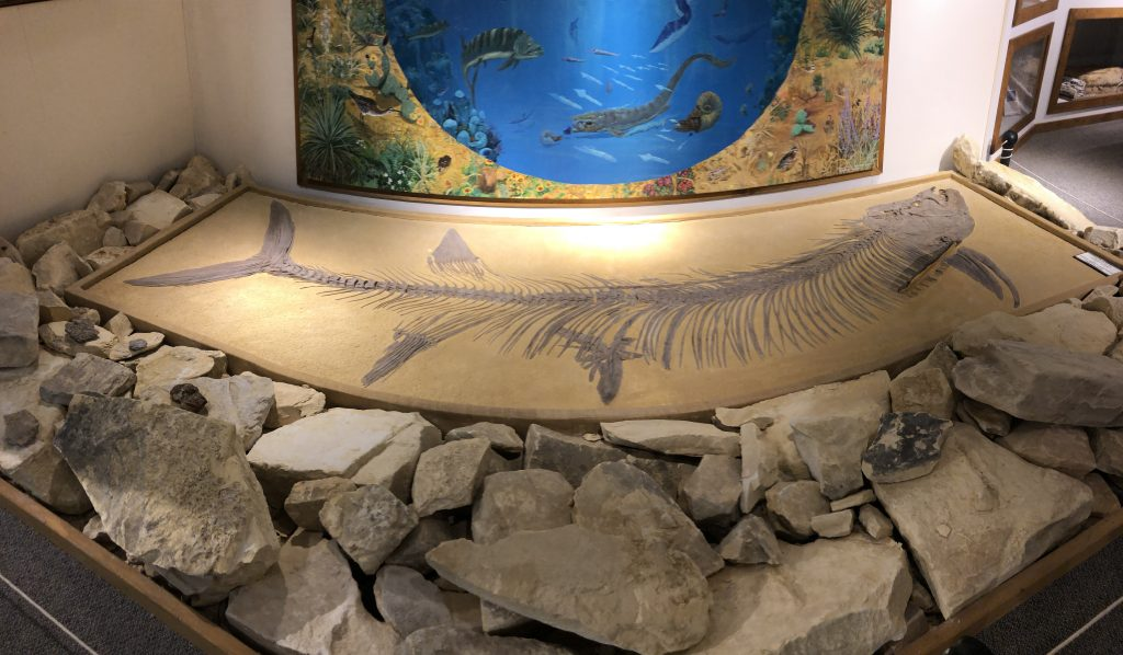 Oakley Museum Fossil Photo An Unrefined Vegan