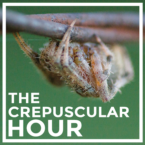 The Crepuscular Hour Next