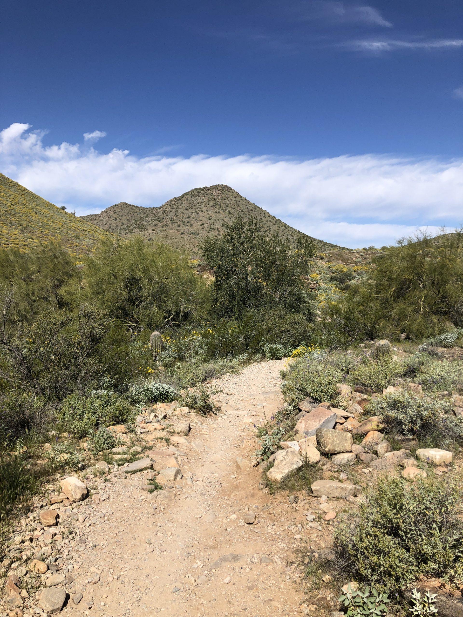 Lost Dog Trail, March 2020
